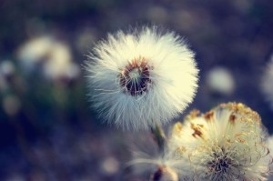 cropped-favim-com-august-beautiful-broken-flower-nature-405026.jpg