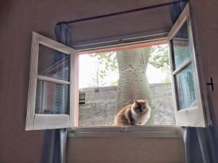 Lolois en la ventana... vamos a pasear!