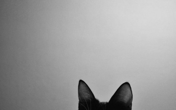 black-and-white-car-cat-ears-Favim.com-2887885